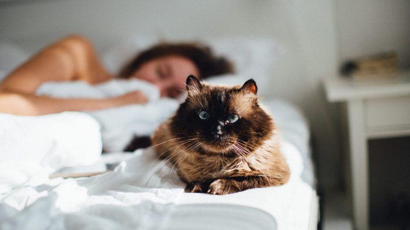 Tu gato no te deja dormir