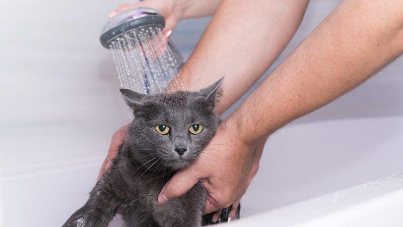 Errores al bañar a tu gato