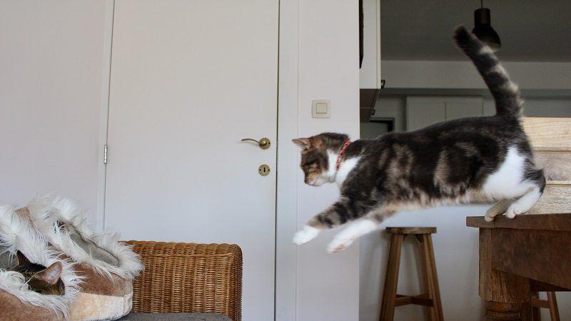 Por qué los gatos caen de pie