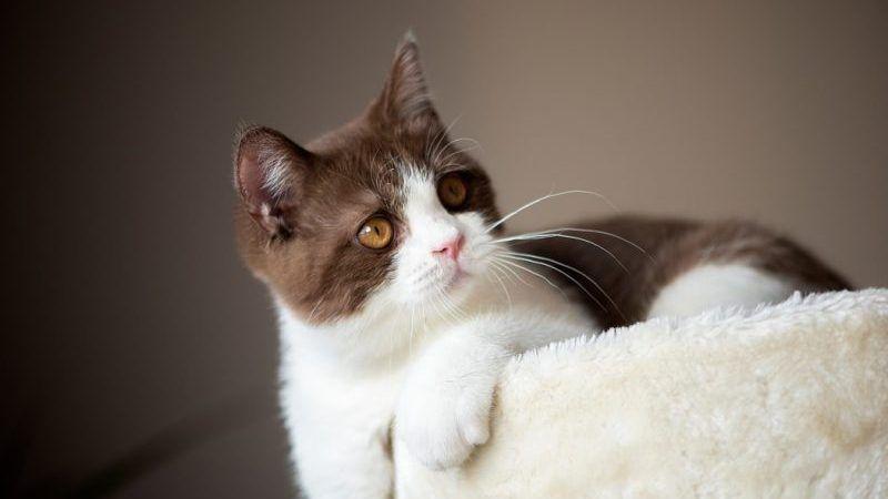 Cómo alargar la vida de tu gato
