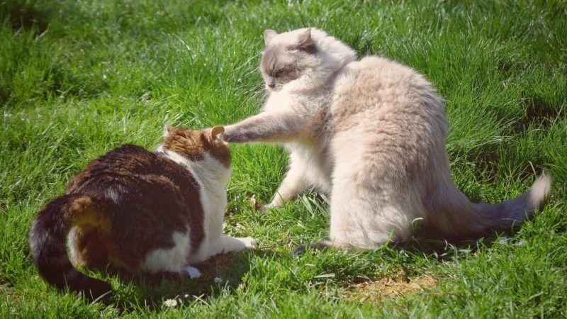 Errores al presentar a dos gatos