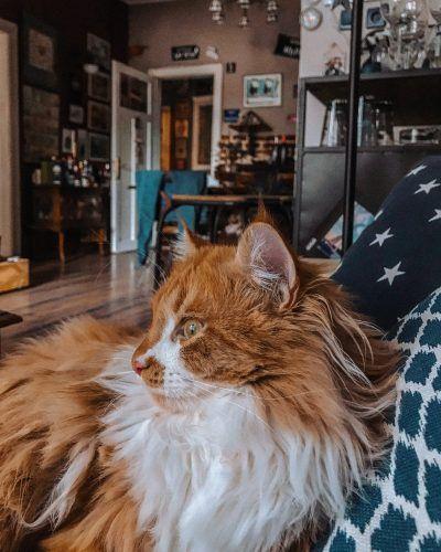 gato anciano