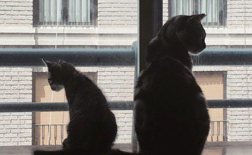 gato joven y adulto