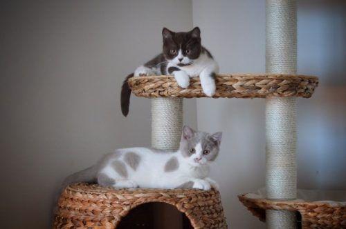 gatos en diferentes alturas