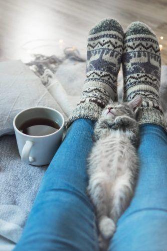 Gato dormido sobre las piernas