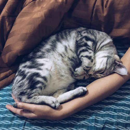 gato durmiendo con persona
