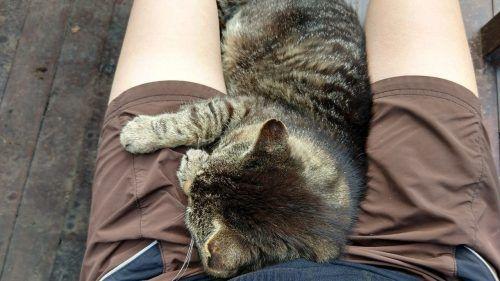 Gato sobre piernas