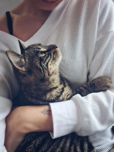 gato en brazos de una persona