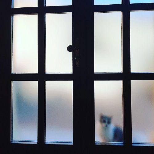 Gato detrás de una puerta
