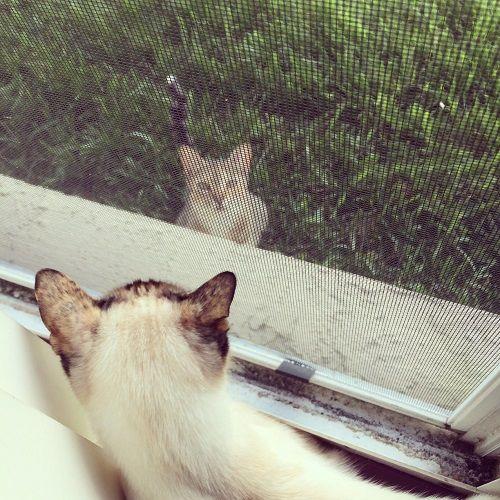 gatos mirándose