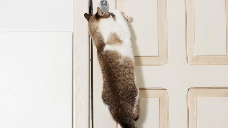 Por qué los gatos odian las puertas cerradas
