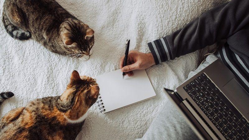 Qué debes tener en cuenta antes de adoptar un segundo gato