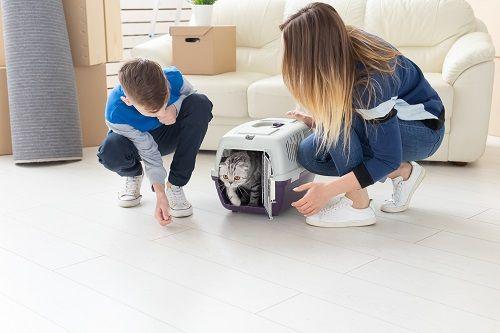 Traer un nuevo gato al hogar
