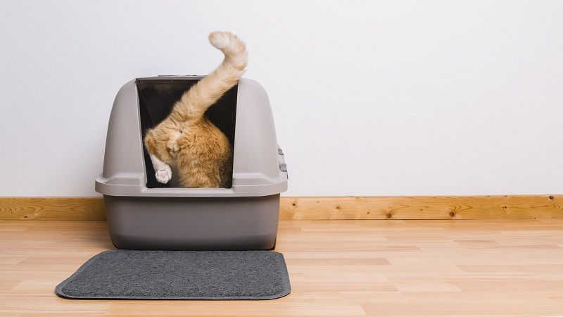 Qué necesita un gato