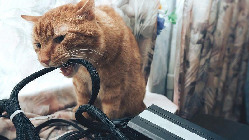 Cómo evitar que tu gato muerda los cables
