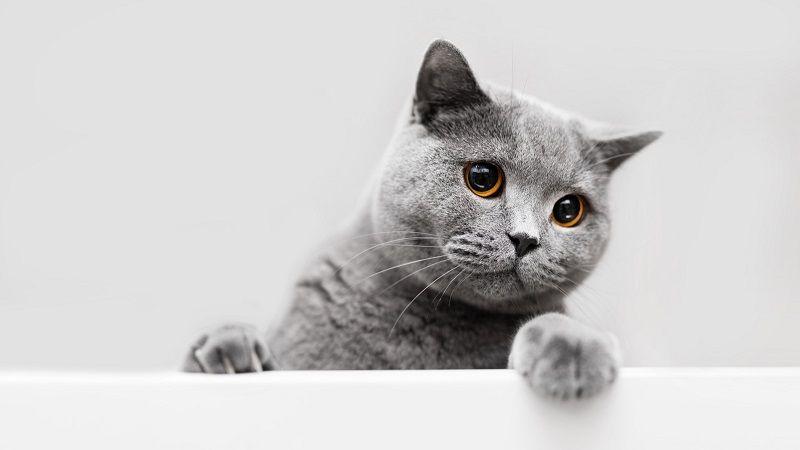 Mi gato se siente solo sin otro gato