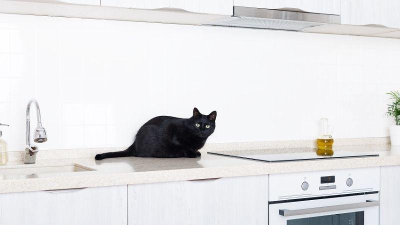 Cómo evitar que tu gato se suba a la encimera de la cocina