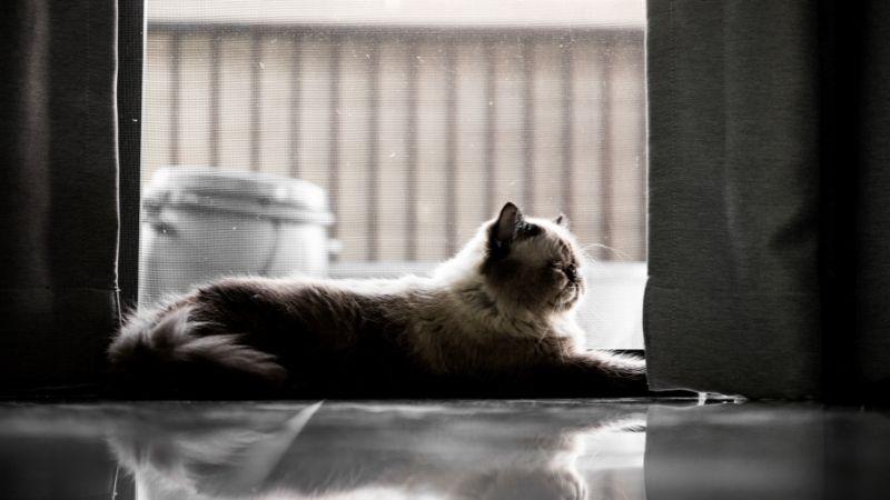 Cuánto tiempo puede estar un gato solo en casa