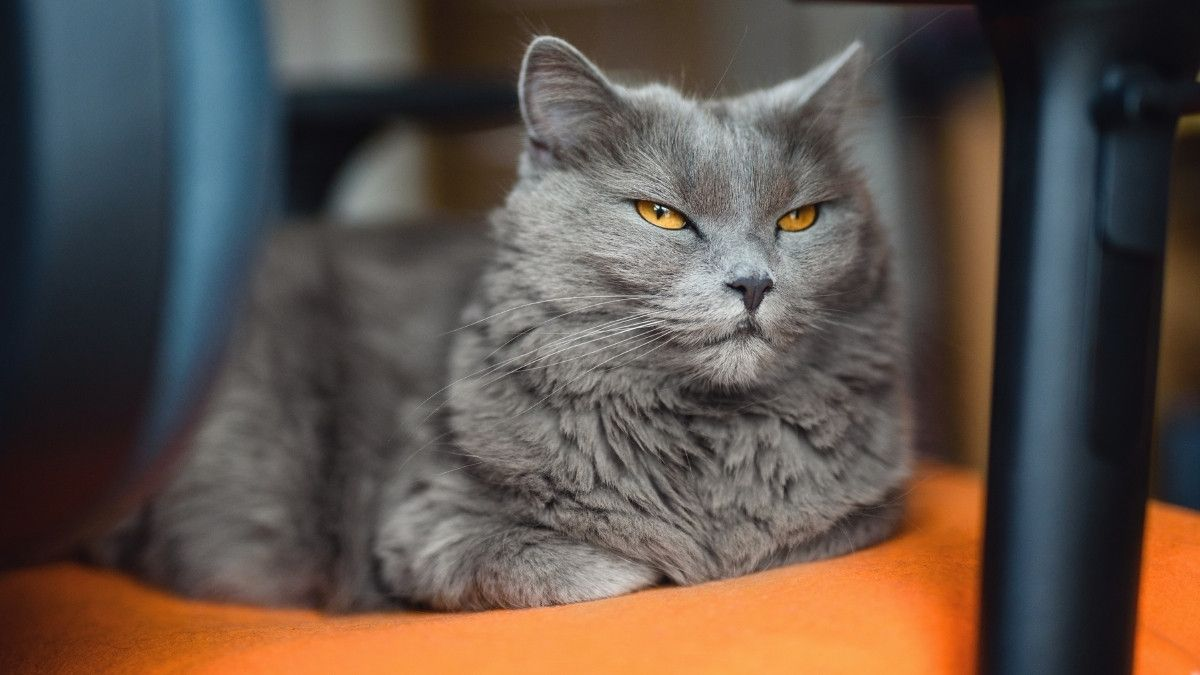 Cuántos años puede vivir un gato