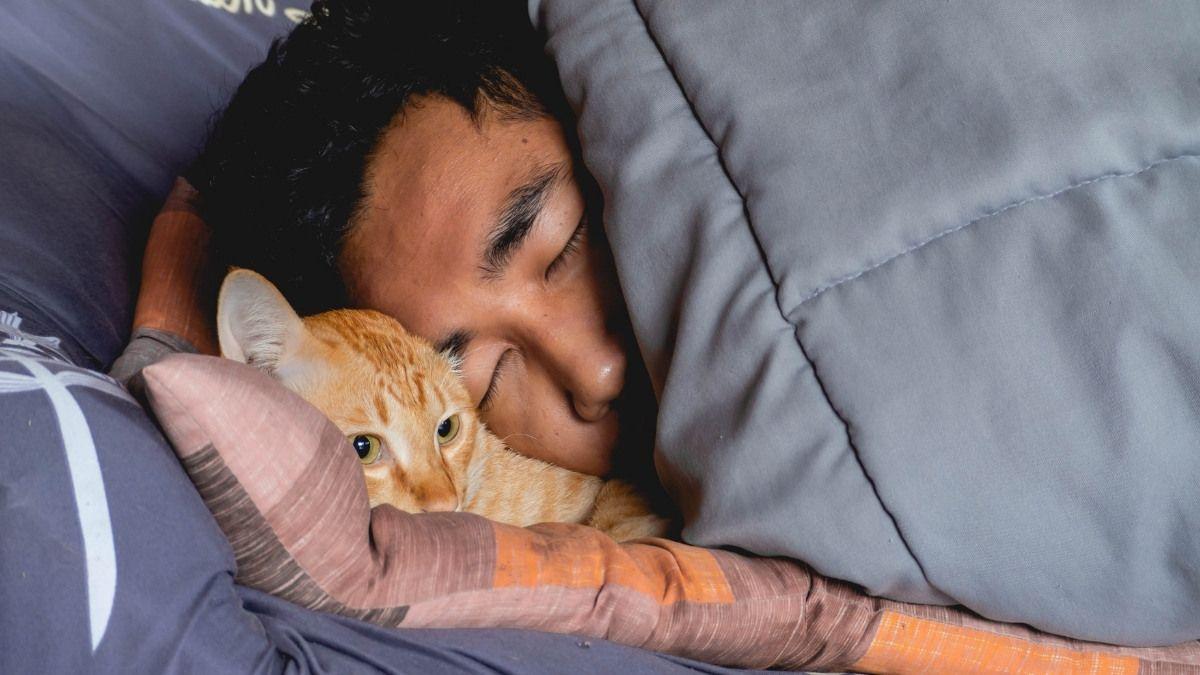 ¿Deberías dejar que tu gato duerma contigo?