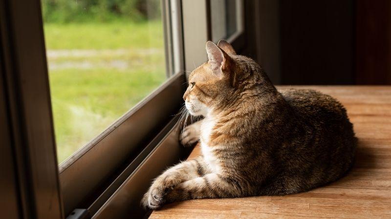 tu gato te echa de menos cuando te vas